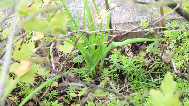 Knoblauch schützt Faultierpflanzen