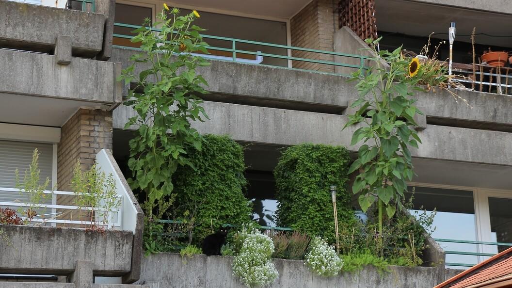 Balkon von der Straße aus, schwarze Katze sitzt vor den Grünpflanzen