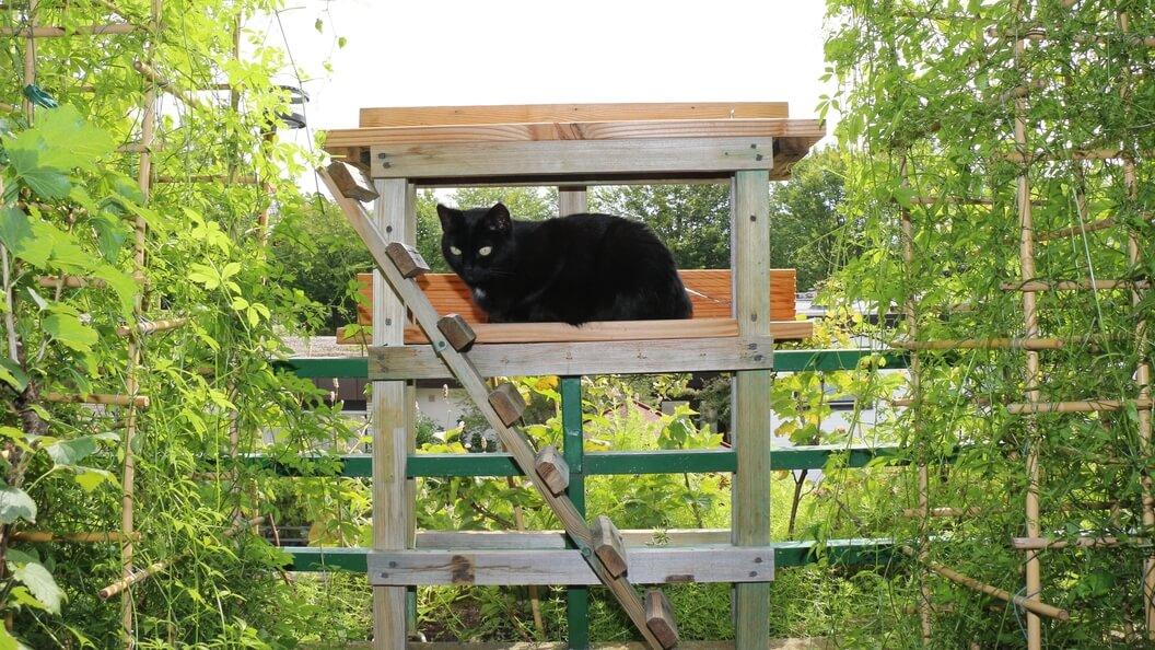 Katze im Aussichtspodest zwischen grünenden Balkonpflanzen