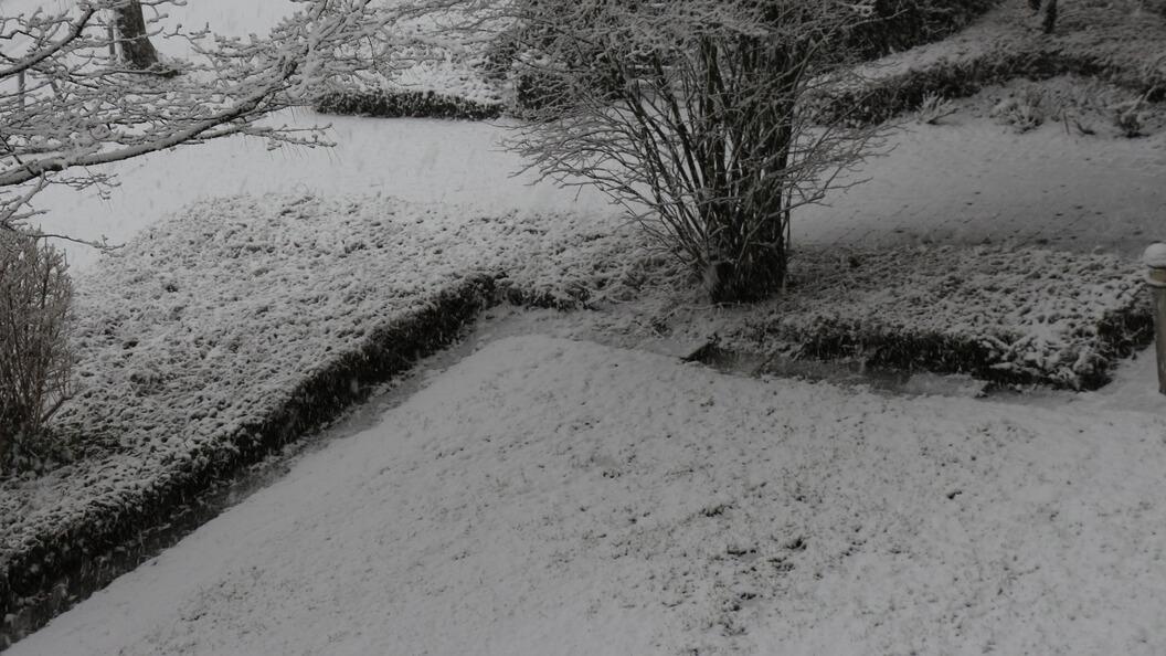 Verschneiter Vorgarten an der Straße im Schmuddelwinter
