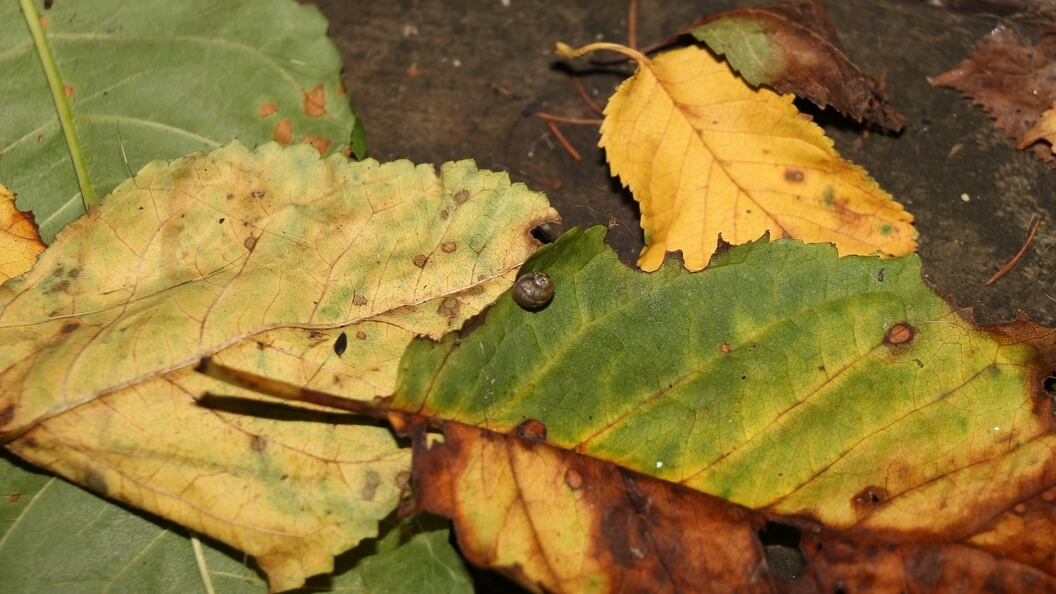 Kleingetier mag die Mulchschicht aus Herbstlaub