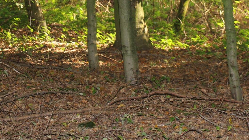 Im Wald fällt Herbstlaub und Geäst runter