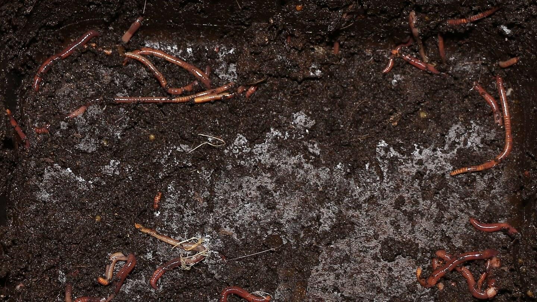 Die Wurmfarm - der andere Kompost